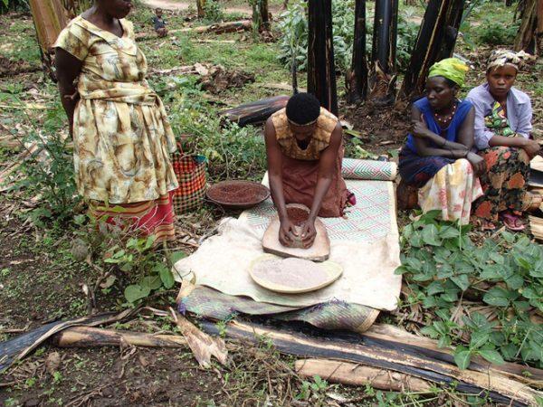 Trong khi đó, người khác sẽ có nhiệm vụ rang những hạt lúa miến lên và giã nhỏ, bỏ vào hỗn hợp chuối cùng thân cây lúa miến đã giẫm nát.
