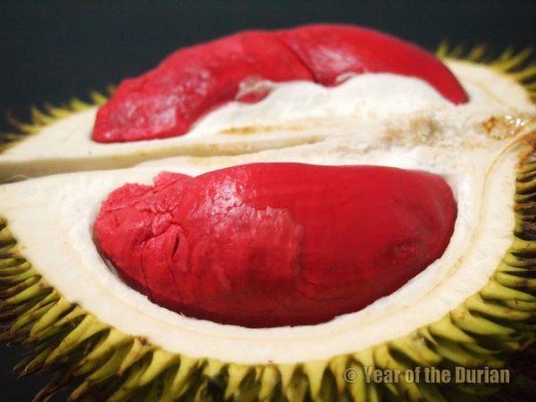 Malaysia còn sở hữu sầu riêng ruột đỏ đặc trưng hiếm thấy (Udang Merah). Ảnh: Year of the durian.