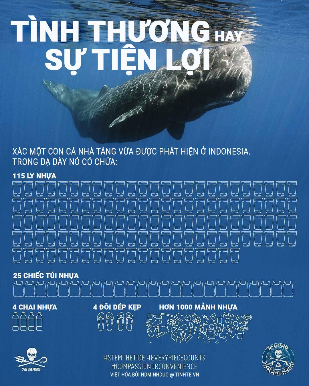 Rác thải nhựa trong bụng cá nhà táng. Infographic của Tinh Tế