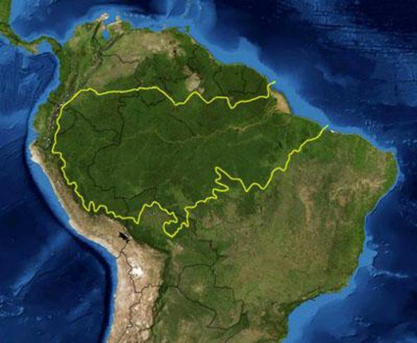 Amazon có tổng diện tích lớn gấp đôi diện tích đất nước Ấn Độ. Khu rừng nằm trong lãnh thổ 9 quốc gia bao gồm Bazil, Peru, Colombia, Venezuela, Ecuador, Bolivia, Guyana, Surinam và Guyana thuộc Pháp. Trong đó, 60% diện tích rừng mưa nằm ở Brazil. Ảnh: Wikipedia