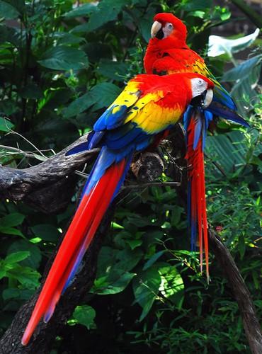 Khoảng 20% loài chim trên thế giới sống trong các khu rừng mưa của Amazon
