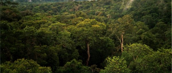 Tuy nhiên, rừng Amazon bị tàn phá nặng nề trong những năm qua. Một trong những nguyên nhân chính là do con người chặt phá rừng để khai thác gỗ, đốt rừng để lấy đất canh tác,...Ngoài ra, đào vàng trái phép cũng là một vấn đề nghiêm trọng ảnh hưởng đến khu rừng nổi tiếng này. Ảnh: Wikipedia.