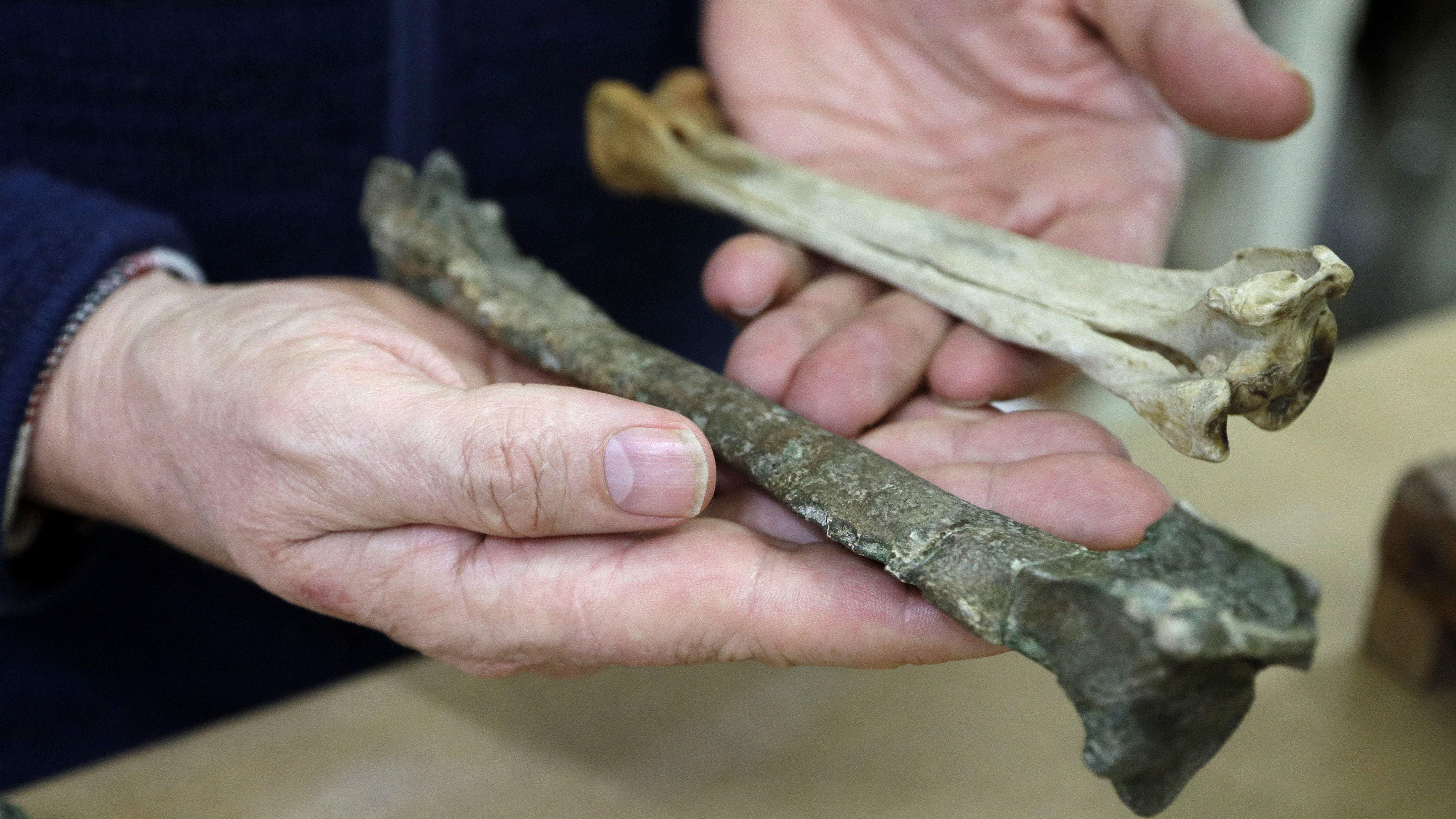 Một mẫu hóa thạch chim cánh cụt cổ đại được tìm thấy ở New Zealand. Ảnh: News UK