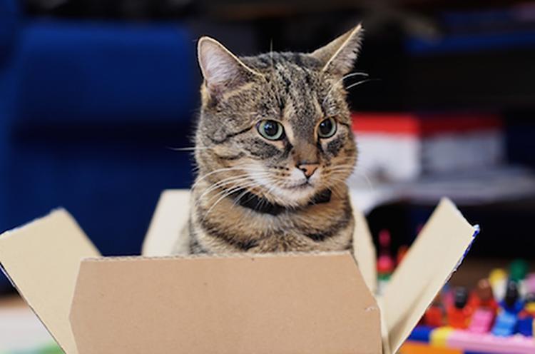 Mèo và khoa học về mèo. Ảnh minh họa: ST.