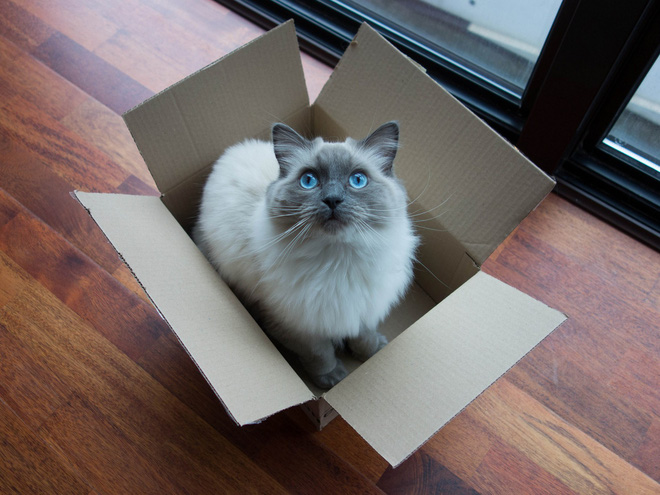 Khoa học giải thích: Tại sao những chú mèo thích hộp?