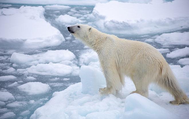 Nguy hiểm hơn khi băng ở Bắc Cực và Nam Cực tan chảy sẽ làm tăng mực nước biển lên trên 3m, đe dọa sự sống còn của những vùng đất ven biển