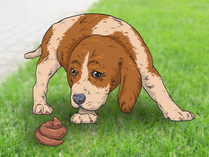 Tại sao chó ăn phân?! Ảnh brightside.me