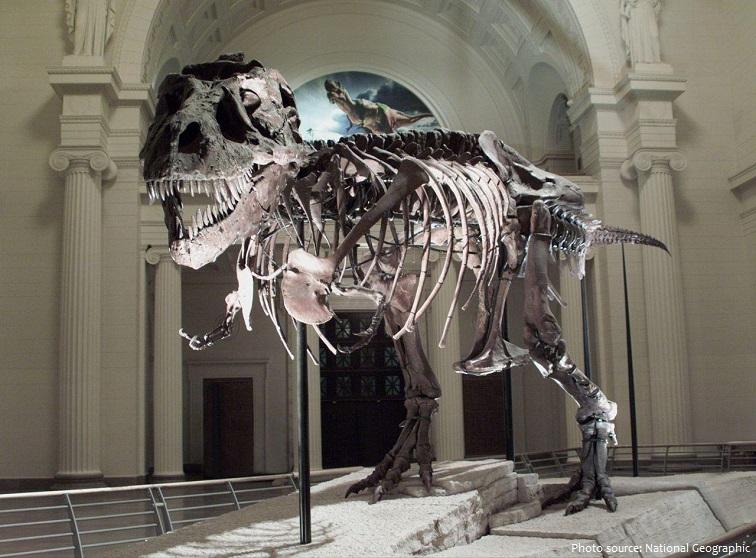 Bộ xương khủng long. Ảnh minh hoạ