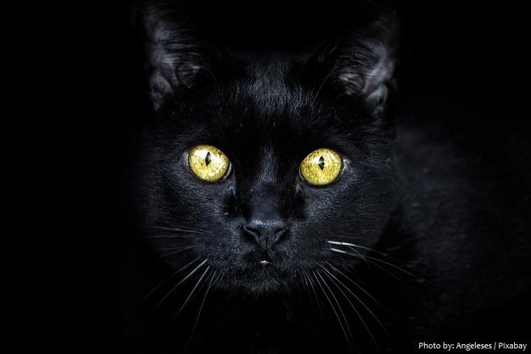 Sự thật thú vị về màu đen