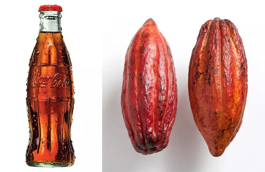 Chai Coca được mô phỏng theo quả ca cao
