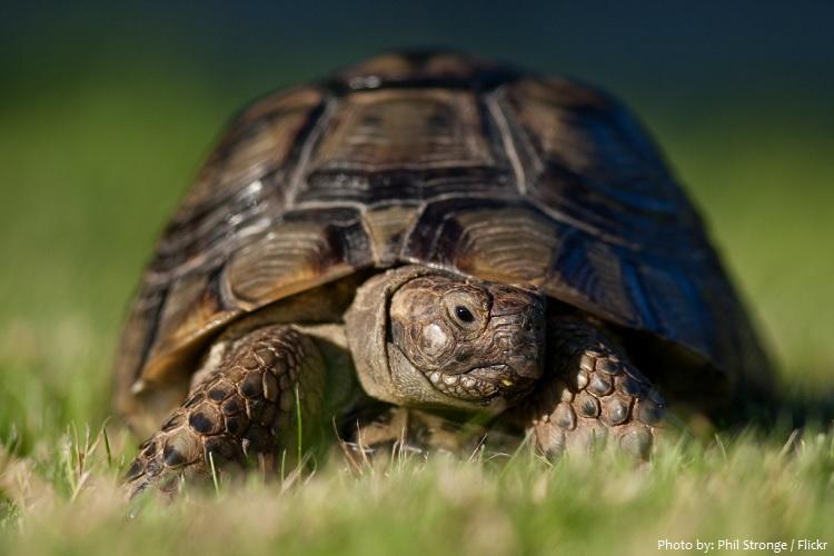 Những điều thú vị về rùa cạn