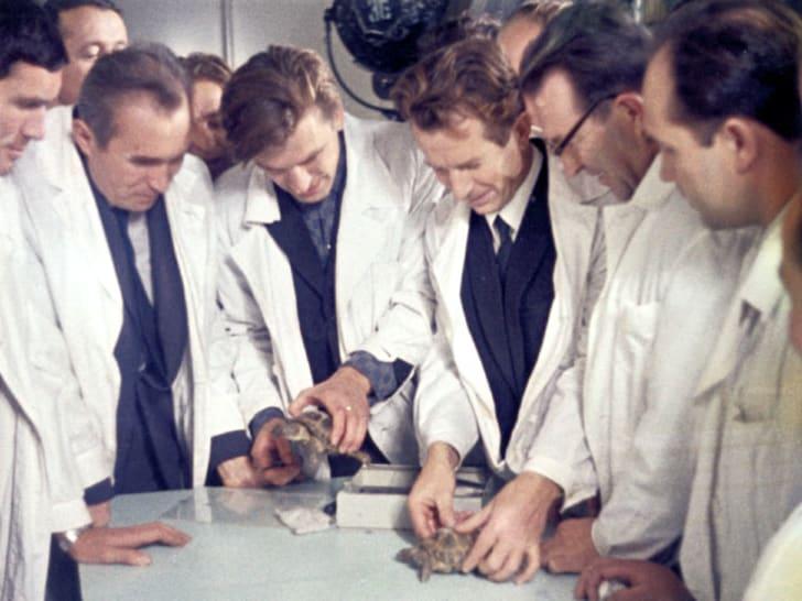 Kiểm tra rùa - sinh vật sống đầu tiên bay quanh Mặt trăng trên tàu vũ trụ Zond 5