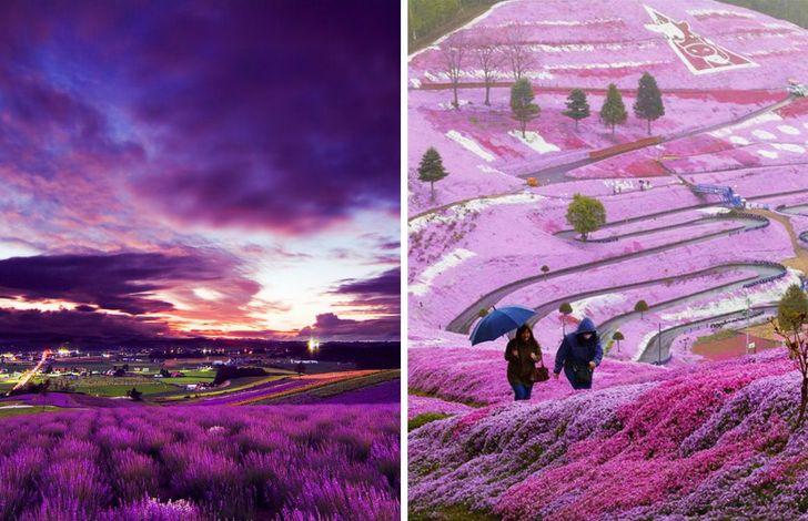 Những người theo chủ nghĩa hoàn hảo của Nhật Bản đã tạo ra một số điểm thu hút khách du lịch vô cùng ấn tượng: Sân thượng Unkai trên đỉnh núi, cánh đồng hoa oải hương, khu nghỉ dưỡng trượt tuyết và Blue Pond.