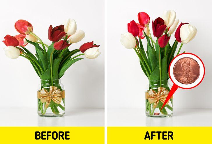 Các đồng xu sẽ lấy lại sức sống cho những bông hoa của bạn ngay lập tức.