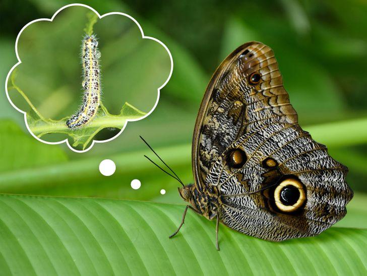 Bướm đêm nhớ mọi thứ khi chúng còn là sâu bướm.