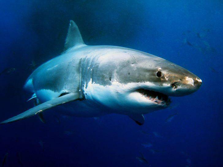 Cá mập già hơn cây cổ thụ hàng triệu năm tuổi.