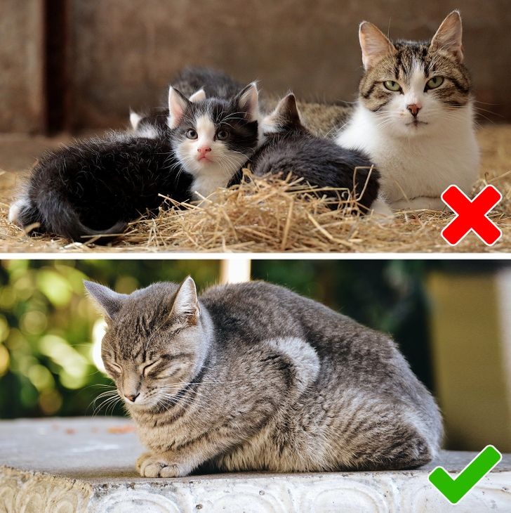vì sức khỏe của thú cưng của bạn, hãy đảm bảo rằng bạn chăm sóc chúng càng nhỏ càng tốt.