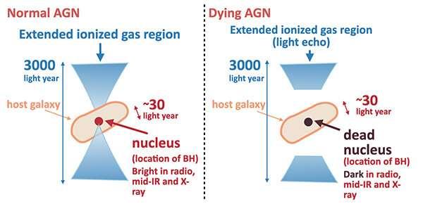 Sự khác biệt quan sát được giữa AGN tiêu chuẩn (trái) và AGN sắp chết (phải) được phát hiện bởi nghiên cứu này. Trong AGN sắp chết, hạt nhân rất mờ trong bất kỳ dải bước sóng nào vì hoạt động của AGN đã chết, trong khi vùng ion hóa mở rộng vẫn có thể nhìn thấy trong ~ 3000 năm ánh sáng vì cần ~ 3000 năm để ánh sáng đi qua vùng mở rộng. Nhà cung cấp: Ichikawa et al.