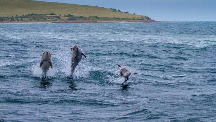 Đảo Kangaroo là điểm tham quan trong mơ của cả trẻ em và người lớn ở Úc - một trong những quốc gia đa dạng và xinh đẹp nhất trên thế giới.