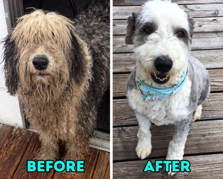 Tắm cho chó hoặc đưa chúng đến tiệm cắt tóc, chải lông và cắt móng cho mèo có thể khiến thú cưng của bạn cảm thấy được chăm sóc.