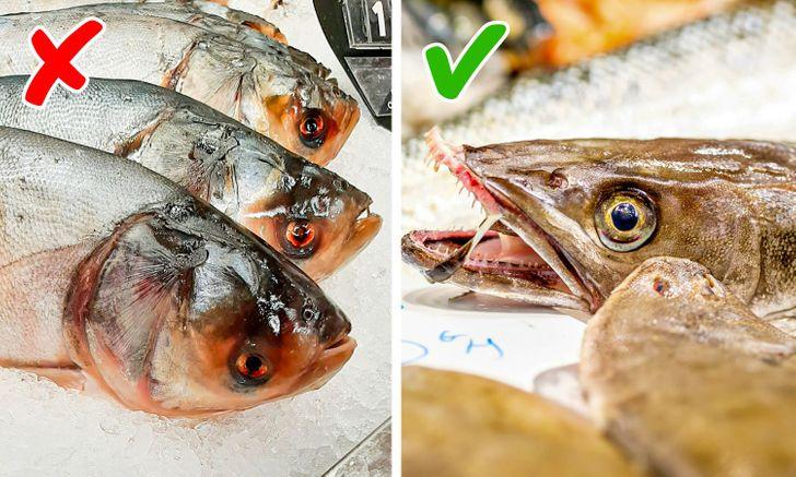 Trước khi mua cá, bạn nên sờ và nhìn kỹ. Cá được ướp lạnh tốt phải có mắt to sáng, không có máu