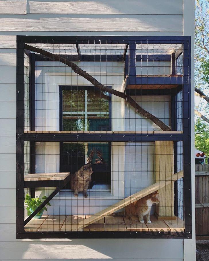 Một trong những cách dễ nhất để kéo dài tuổi thọ cho mèo là nuôi chúng trong nhà.