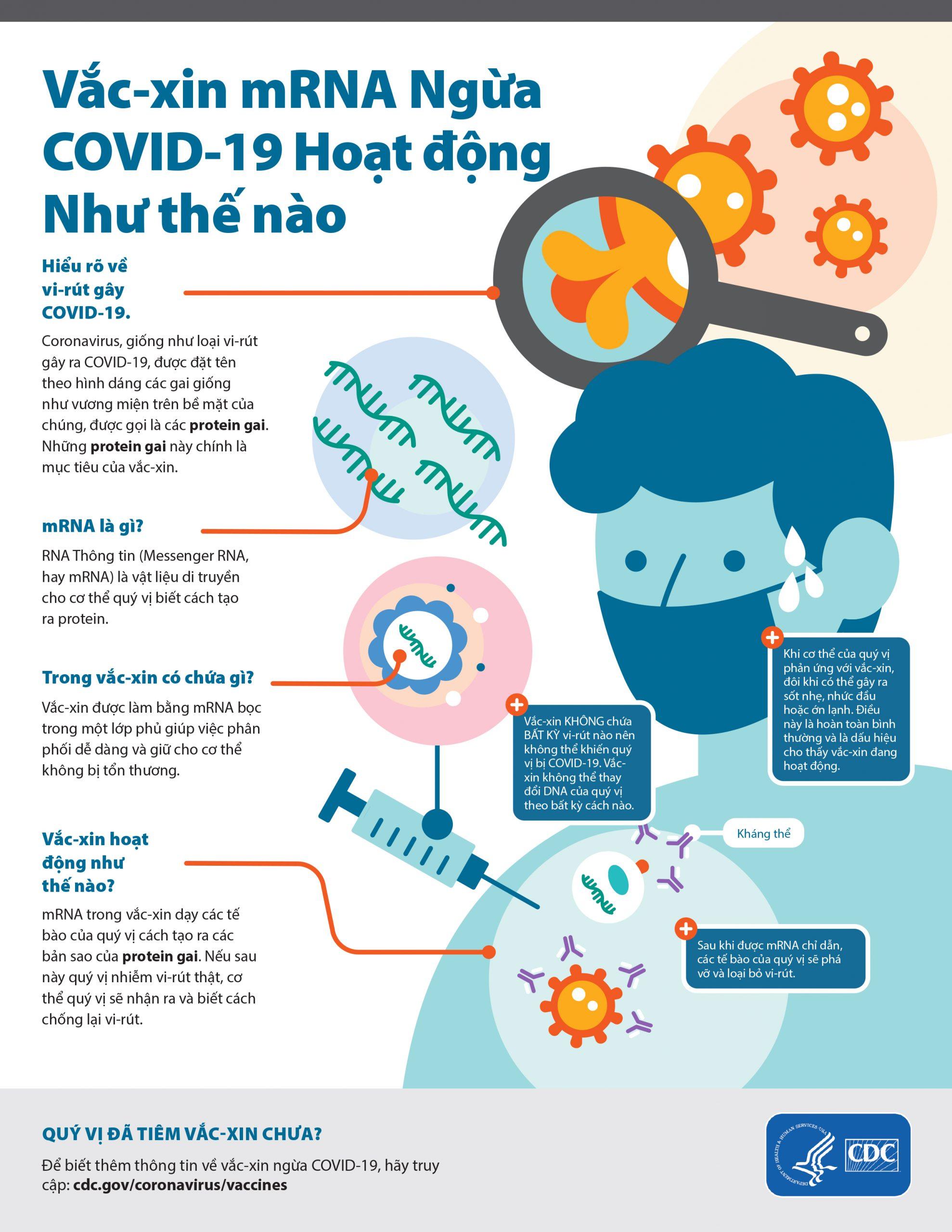 mRNA là gì?! Infographic Vắc Xin mRNA ngừa Covid-19 hoạt động như thế nào?! của CDC