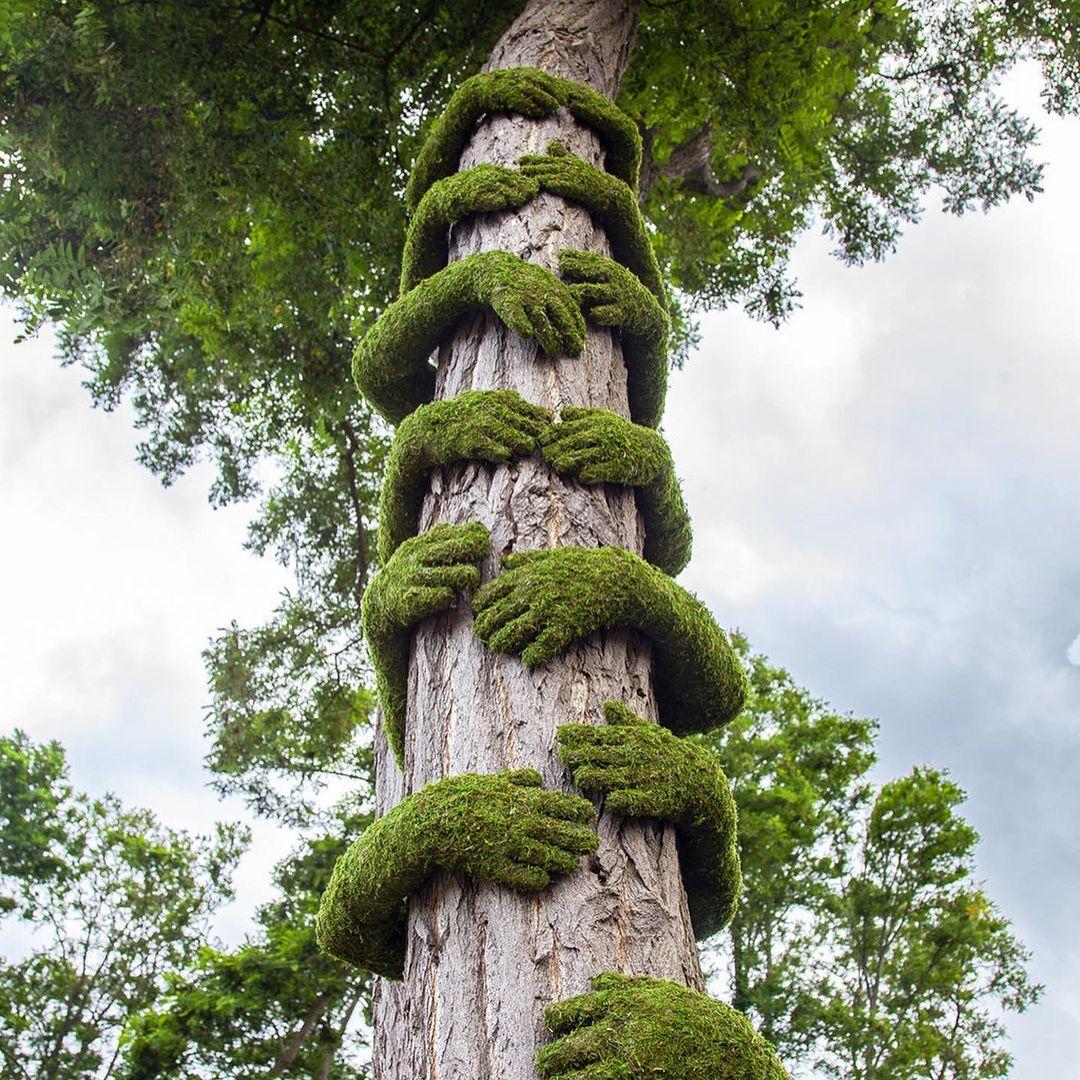 tree Hug, Monsieur Plant (Christophe Guinet), Louvre
