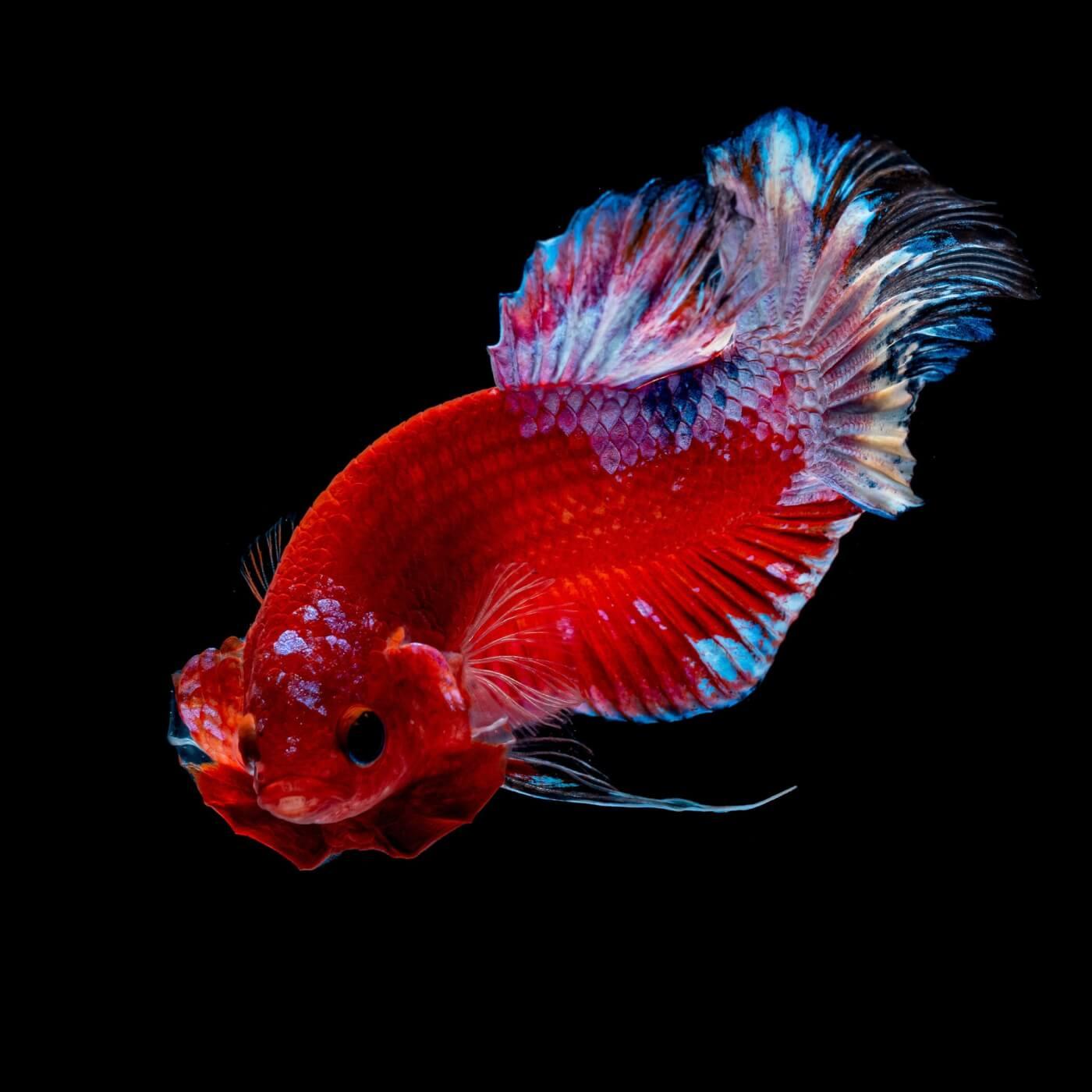 24 sự thật hấp dẫn chứng minh cá là sinh vật siêu việt