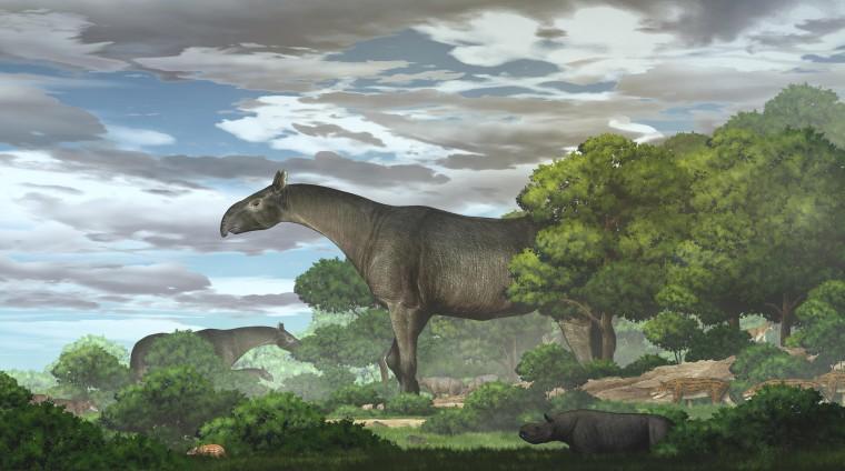 Tái tạo sinh thái của tê giác khổng lồ mới Paraceratherium linxiaense ở Cao nguyên Đông Bắc Tây Tạng trong cuối Oligocen.