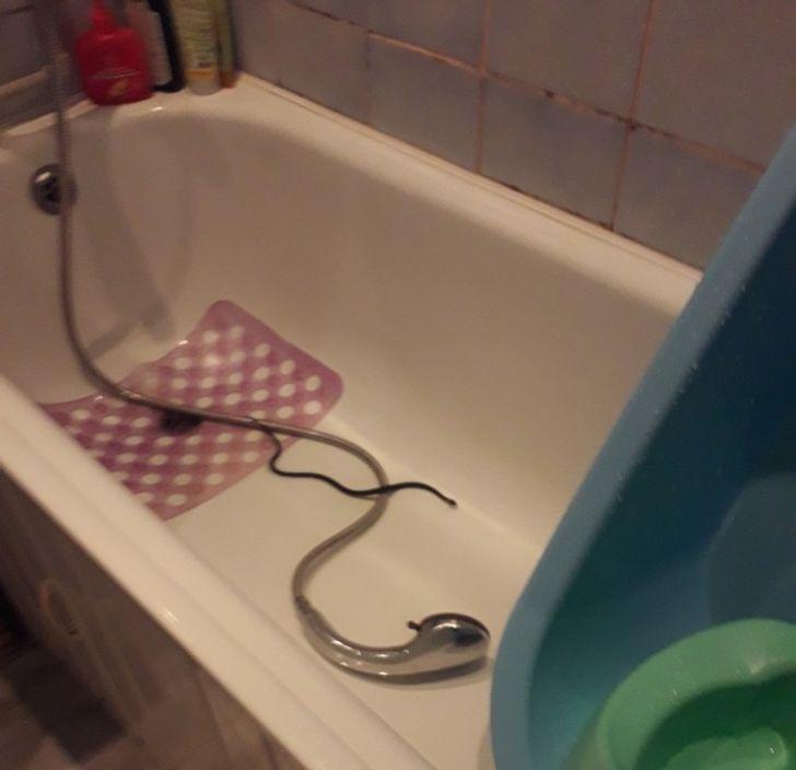 Tôi muốn đi tắm nhưng có vẻ như con rắn này có kế hoạch khác.