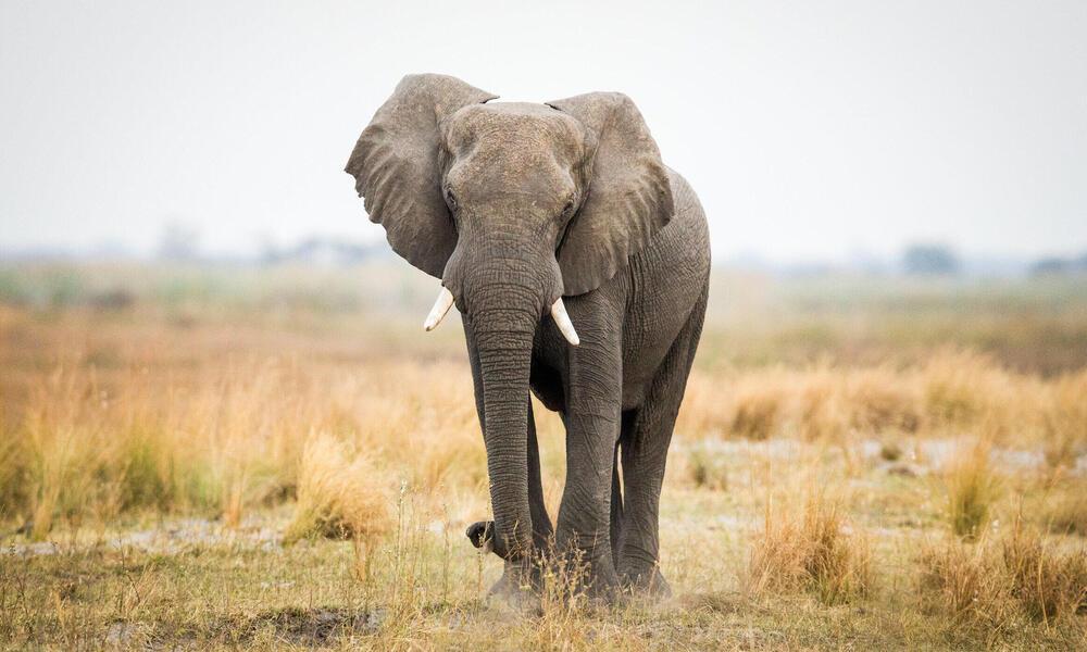 © Will Burrard-Lucas / WWF-US