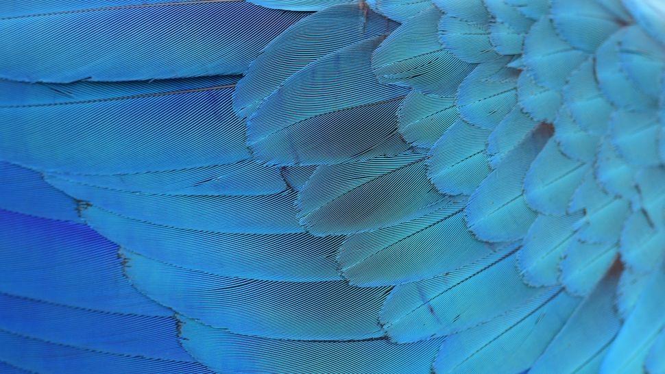 Bộ lông màu xanh lam rực rỡ của các loài chim, chẳng hạn như của vẹt đuôi dài Spix ( Cyanopsitta spixii ), nhận được màu sắc của nó không phải từ sắc tố mà từ các cấu trúc trong lông vũ phân tán ánh sáng.Ảnh: Wera Rodsawang / Getty Images